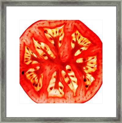 Tomato Slice Framed Print by Paul Ge