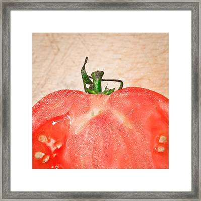 Tomato Framed Print by Tom Gowanlock