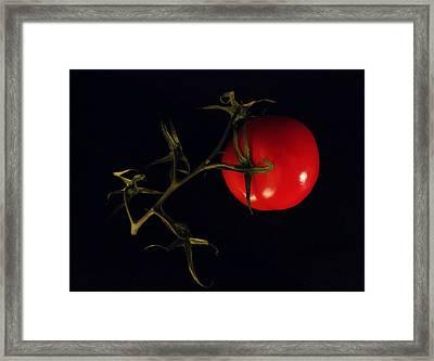 Tomato With Stem Framed Print by Patricia Januszkiewicz