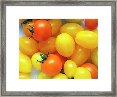 Tomatoes 'ildi' And 'orange Paruche' Framed Print