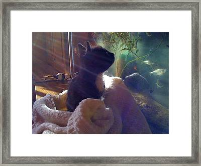 Tommy In Sunshine Framed Print by Gabriel Cioban