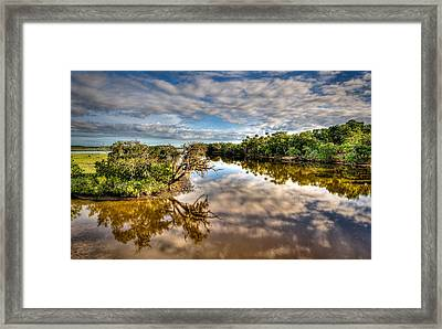 Tomoka Oaks Framed Print