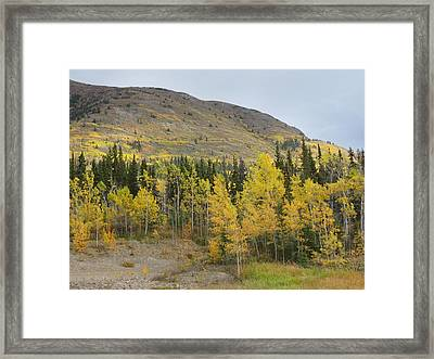 Tongas Trailride Framed Print by Kimber  Butler