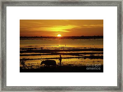 Tonle Sap Sunrise 01 Framed Print