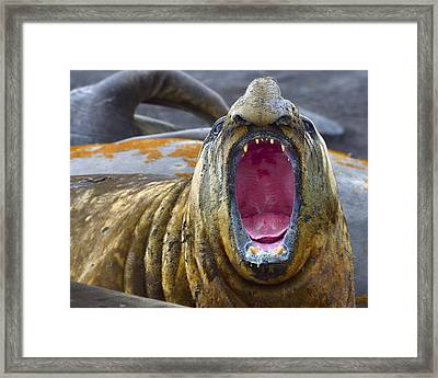 Tonsils And Trunks Framed Print by Tony Beck