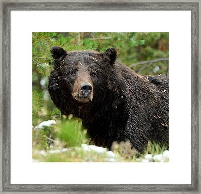 Framed Print featuring the photograph Too Close For Comfort by Yeates Photography
