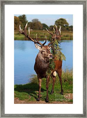 Too Close Framed Print by Pete Reynolds