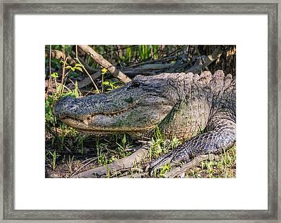 Too Close Framed Print by Steve Harrington