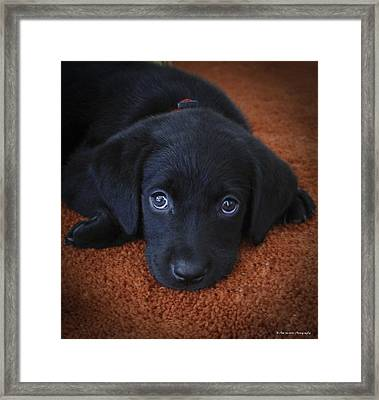 Framed Print featuring the photograph Too Cute by Phil Abrams