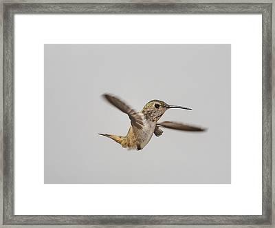 Too Fast Framed Print