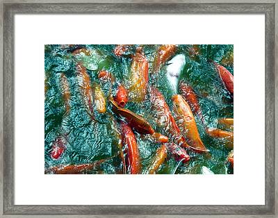 Too Many Mouths To Feed Framed Print