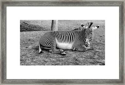 Framed Print featuring the photograph Too Tired by Elaine Malott