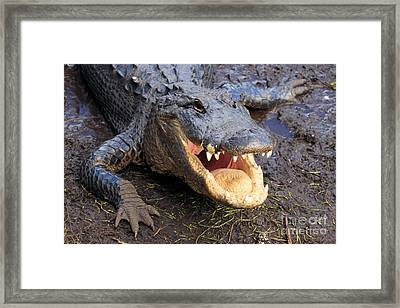 Toothy Grin Framed Print