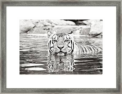Top Cat -bw Framed Print