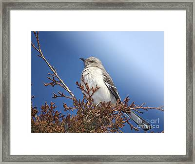 Top Of My Game Framed Print by Betty LaRue