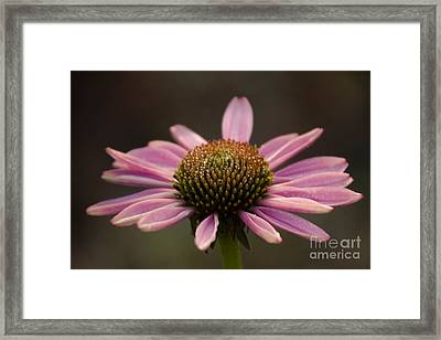 Top Side Framed Print