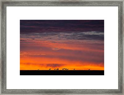 Framed Print featuring the photograph Topi Herd Sunrise by Mike Gaudaur