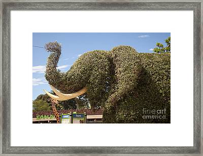 Topiary Elephant Framed Print