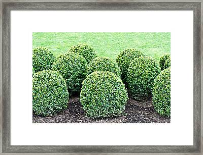 Topiary Plants Framed Print