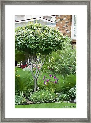 Topiary Tree Digital Gouache Art Work Framed Print by Sandra Foster