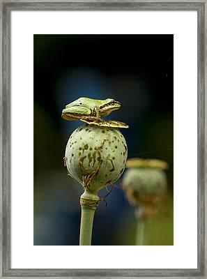 Topper Framed Print by Jean Noren
