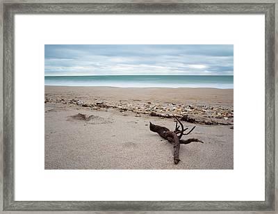 Topsail Island Driftwood Framed Print