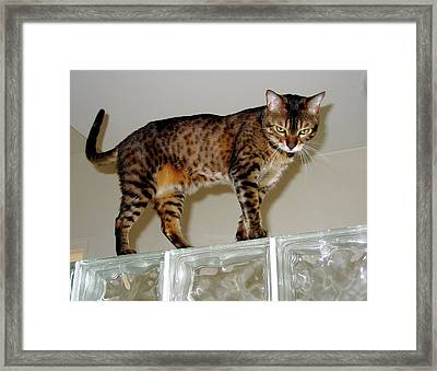 Framed Print featuring the photograph Tora On Glass II by Phyllis Kaltenbach
