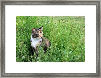 Torbie Landscape Framed Print