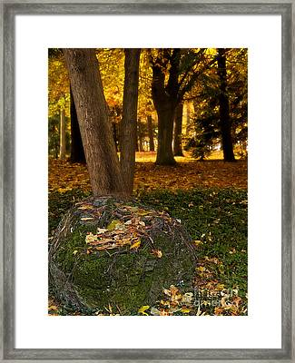 Torch Of Autumn Framed Print by Lee Craig