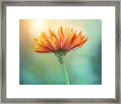 Torch Song Framed Print by Amy Tyler