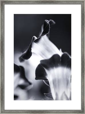 Torenia In Bw Framed Print