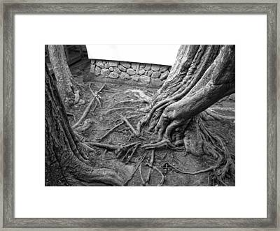Tormented Trees Of Japan Framed Print by Daniel Hagerman