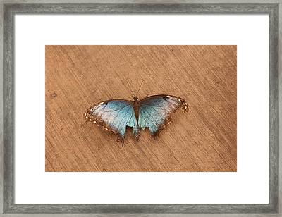 Torn Beauty Framed Print by Lora Lee Chapman