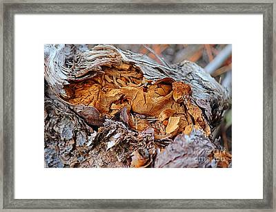 Framed Print featuring the photograph Torn Old Log by Ann E Robson