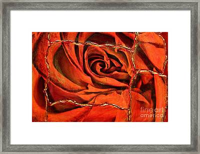 Torn Rose Framed Print by Pattie Calfy
