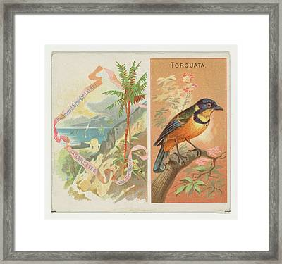 Torquata, From Birds Of The Tropics Framed Print