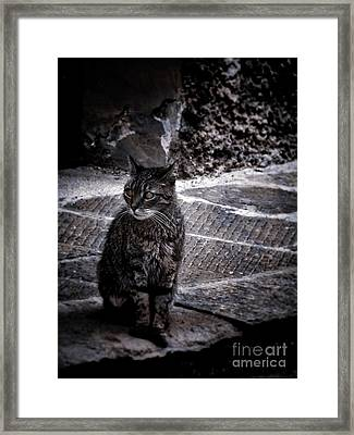 Tortishell Cat Framed Print by Karen Lewis