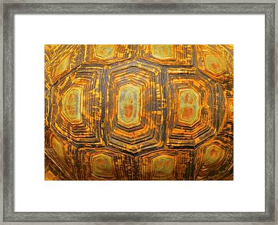 Tortoise Abstract Framed Print