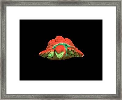 Tortoise Framed Print by Dan Sykes/natural History Museum, London