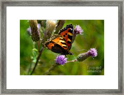 Framed Print featuring the photograph Tortoise Shell Butterfly by Scott Lyons