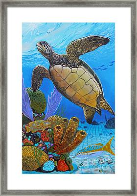 Tortuga Framed Print by Carey Chen