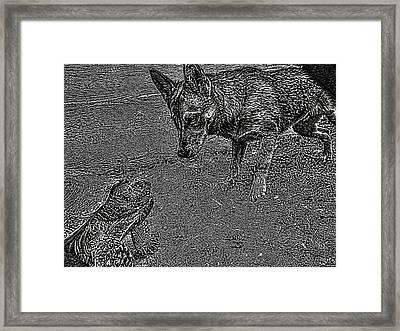 Tortuga Duel Framed Print