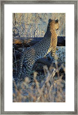 Total Attention Framed Print