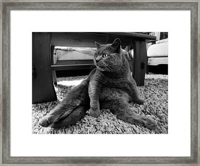 Framed Print featuring the photograph Totally Relaxed by Laura Melis