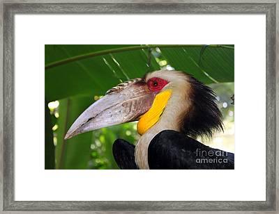 Toucan Framed Print by Sergey Lukashin