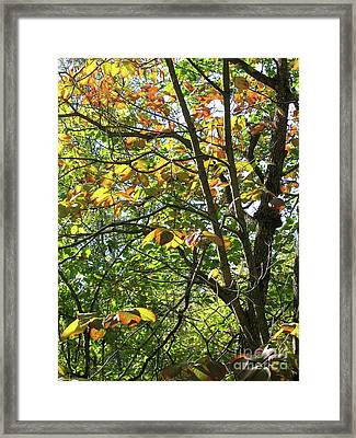 Touch Of Autumn Framed Print by Ann Horn