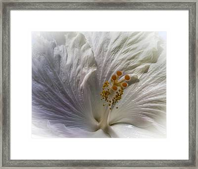 Touch Of Blue Framed Print by Jill Balsam