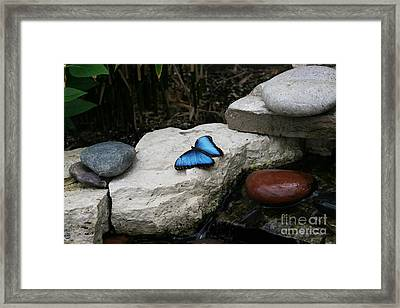 Touch Of Blue Framed Print by Judy Whitton
