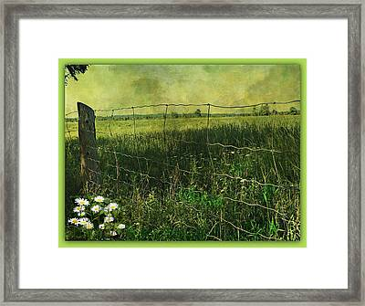 Touch Of Daisies  Framed Print by Dianne  Lacourciere