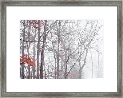 Touch Of Fall In Winter Fog Framed Print